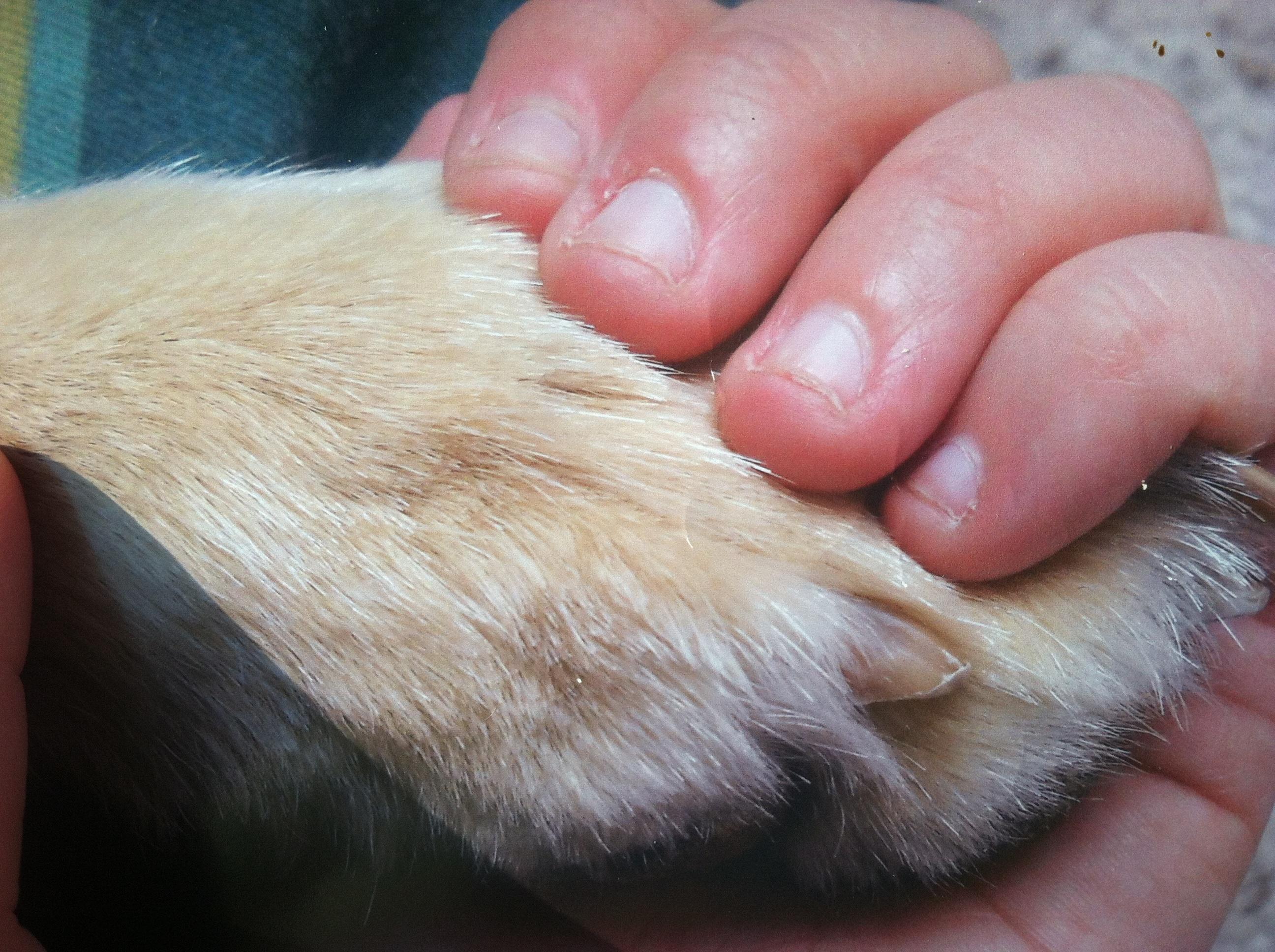 nail biting – horrendous color